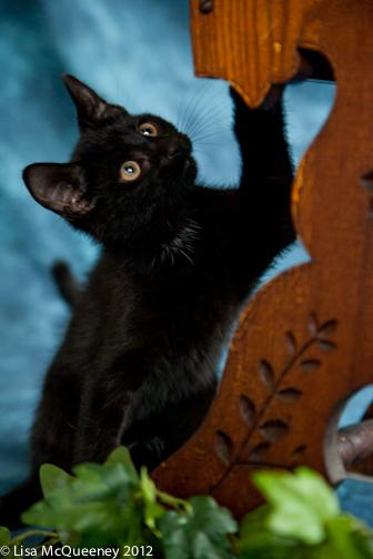 Black Playful Fellow