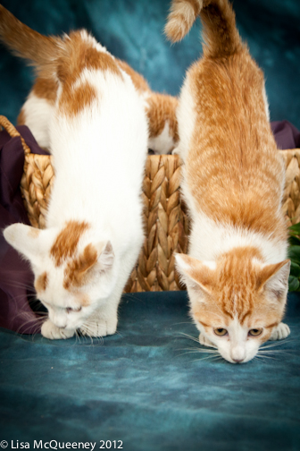 Orange/ White Litter