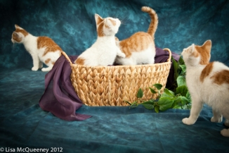 Orange White Litter